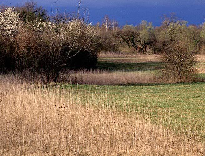 Pflege-, Massnahmenpläne Naturschutz Gebiet Reinacherheide, BL