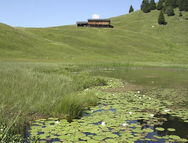 Vernetzungs Projekte Graubünden (seit 2005)
