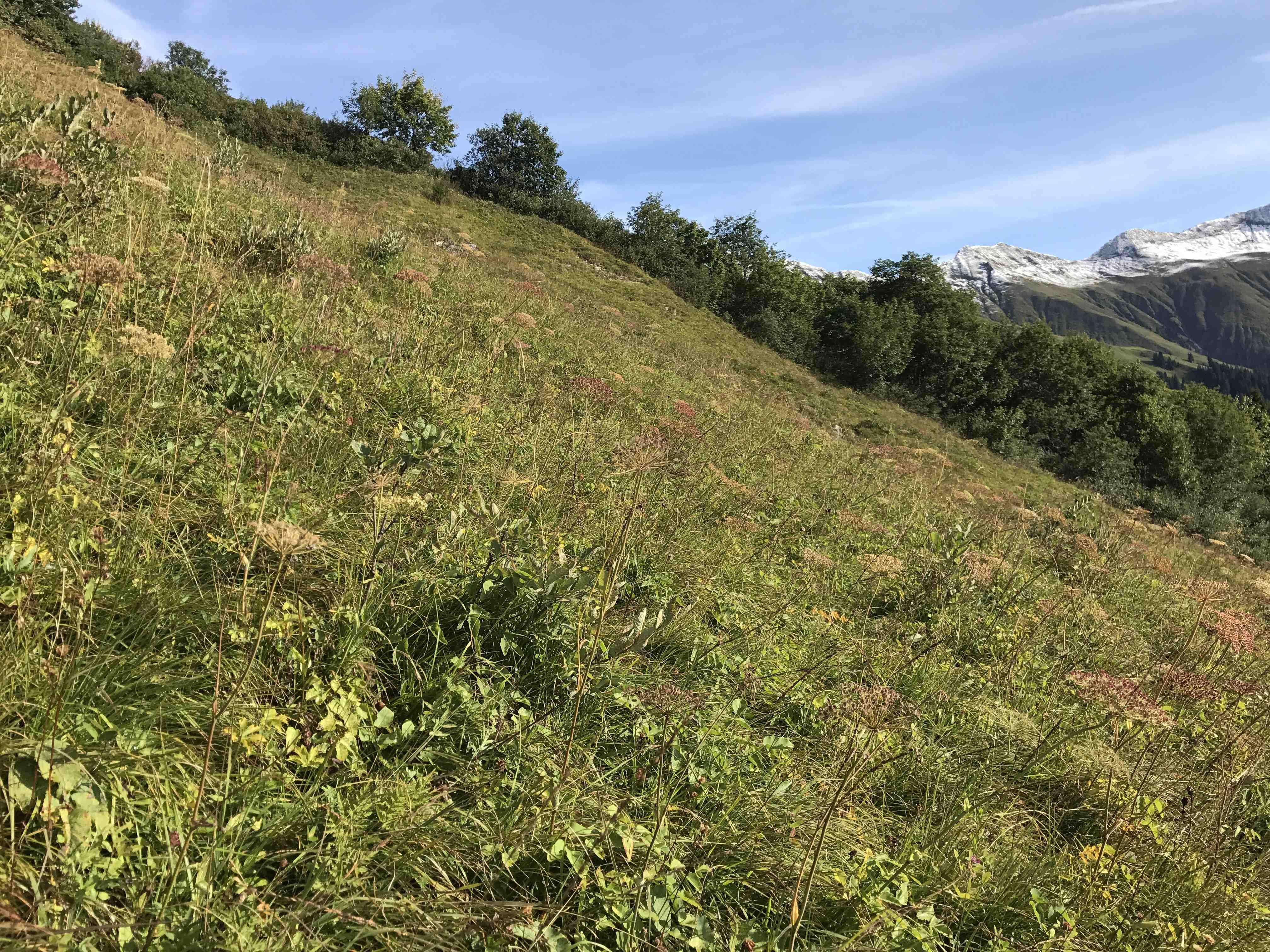 Sanierung von Tww- und Flachmoor-Brachen im Kanton GR (Brachenprojekt, seit 2016)