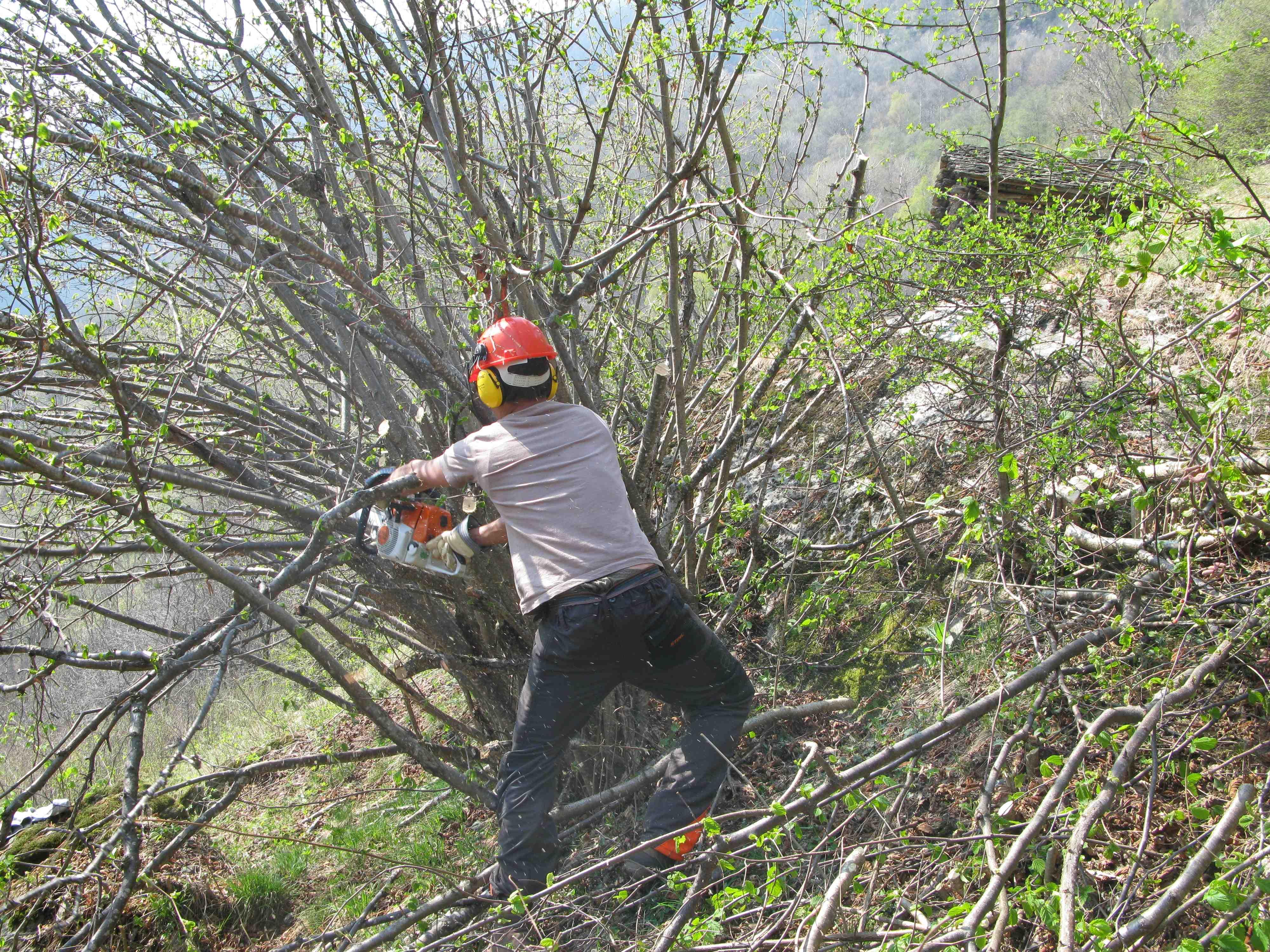 Herausgegriffen: Stiftung Umwelteinsatz