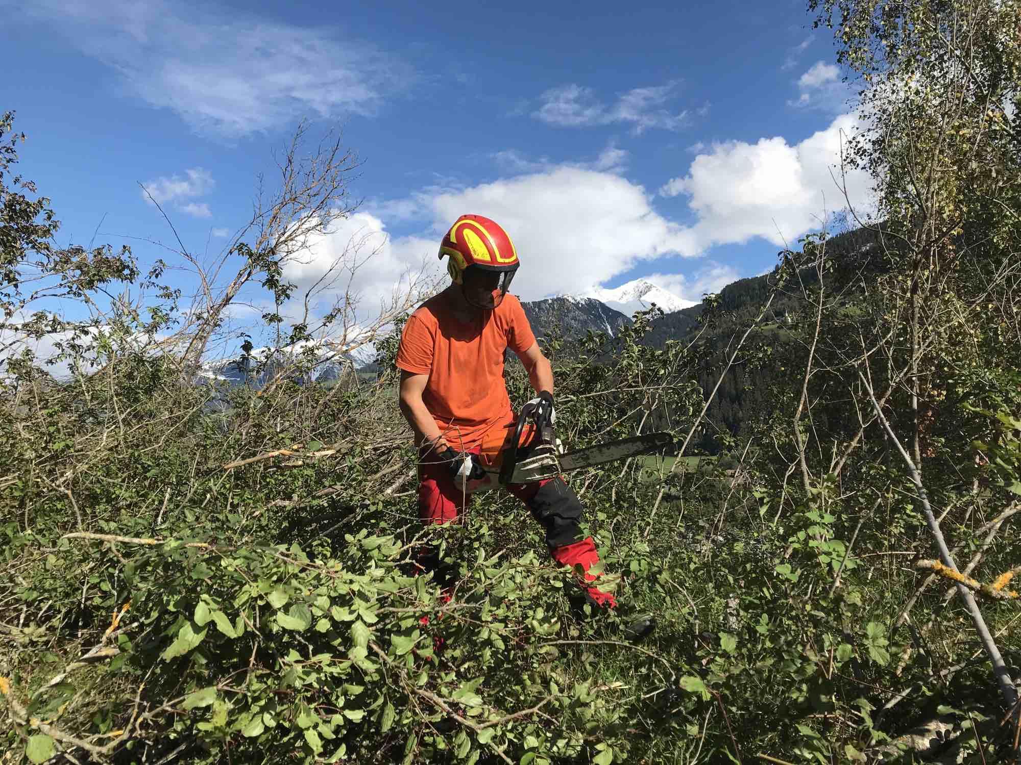 Biotoppflege im Berggebiet – Jungprofis und Praktikanden gesucht